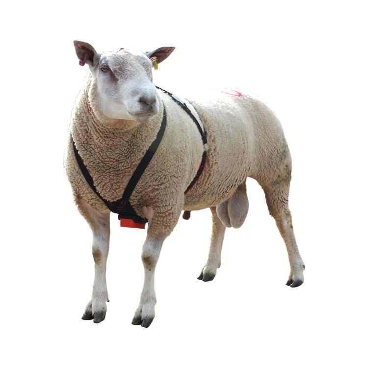 Pedigree Breeder Quality Cotton Ram Harness    Shearwell Co Uk