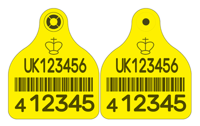 Picture of England and Wales Cattle Replacement Primary Combi 3000® Large - with Barcode