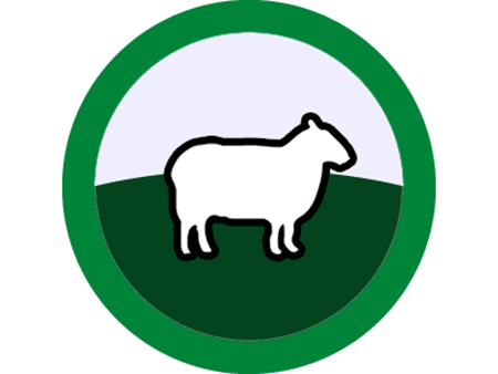 Picture for category Sheep