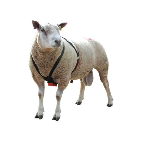 Picture for category Tupping